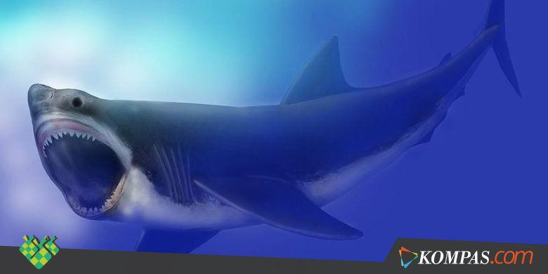 Kejadian Kepunahan Predator Laut Terbesar Diungkap, Beginilah Kisahnya - Kompas.com